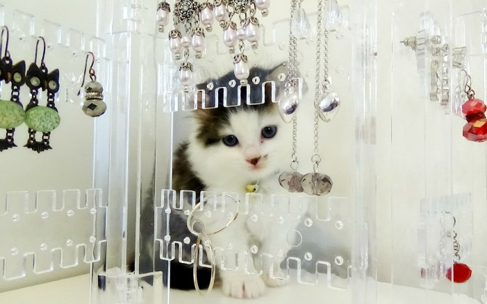 Maine Coon Kitten 10