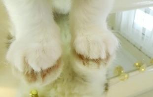 Maine Coon Kitten 9